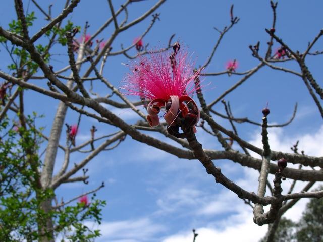 pink shaving brush