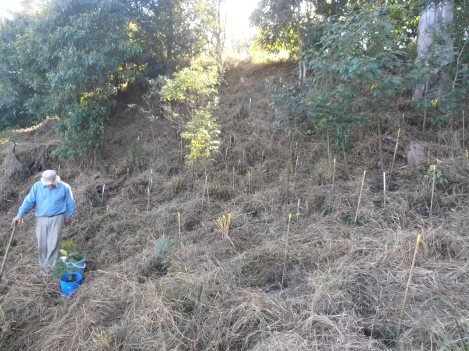 Ian ever planting!