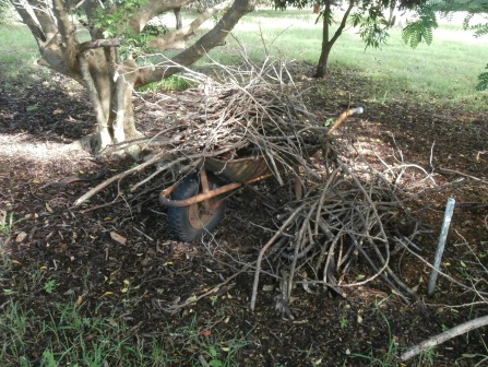 sticks waiting to be mulched