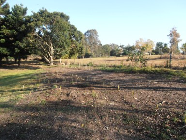 a new site for plants