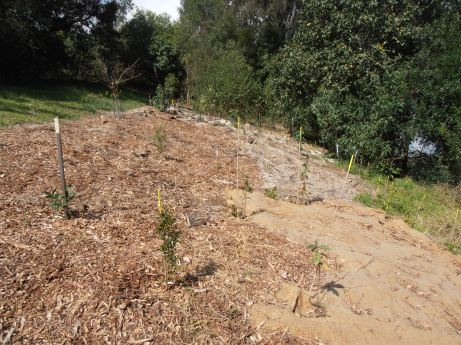 mixture of wood-chip and jute over large area