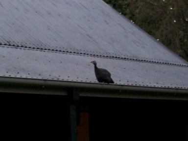 little Pip trying to scramble up to Winnie on the metal roof